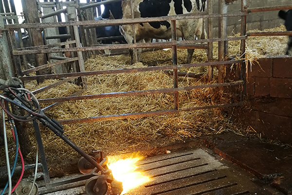 decapage-chariot-etable-vache-flamme